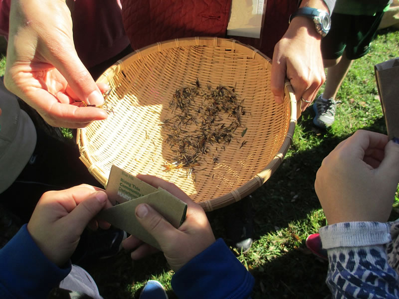 hands on bowl of seeds