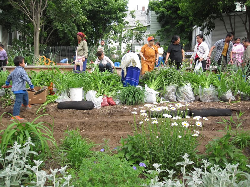 people working in garden